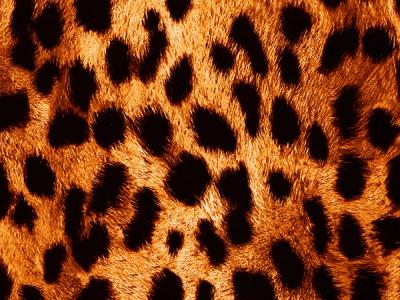 Красный гепард - ширина 50 см