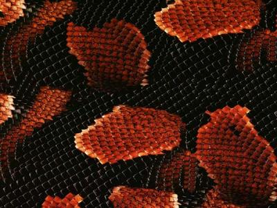 Предатор красный - ширина 50 см